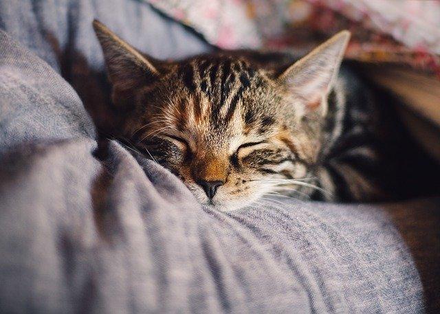 ma chère secrétaire sommeil